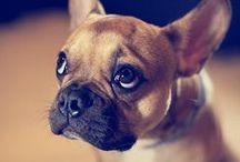Pets / by Q102/WKRQ