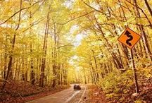 Travel the Tunnel of Trees / Travel Michigan's most famous stretch of scenic highway. the 20-mile Tunnel of Trees, highway M-119 stretching along the Lake Michigan shoreline in beautiful Emmet County.  #goodhart  #tunneloftrees