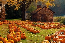 Holiday Stuff: Fall / Autumn stuff, Halloween, Thanksgiving / by Katieb (Mundie Moms)