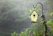 Bird houses and outdoors decorations / by Janice Powell