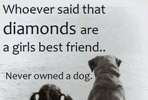 Pets / All things for our best friends