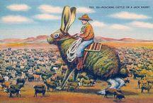 Vintage Postcards / by Emma James