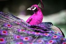 Fabulous Feathered Birds / Birds in Nature and thier fabulous feathers