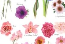 Flowers / Garden... / by Janice Emerson