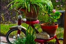 Plants & Gardening