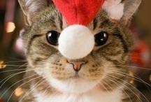 Christmas Joy! / Share some Holiday Cheer!