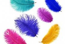 OSTRICH FEATHERS / Several styles, colors and sizes of Ostrich feathers available at www.featherplace.com