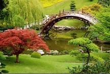 Botanical Gardens / by Brenda Morris