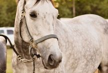 horseback riding / My addiction to all things equine / by Megan Murphy