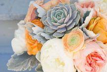 Wedding / Gemma's September Wedding / by Abigail Taylor