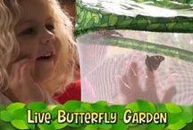 Butterfly Videos / by Insect Lore