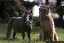 Miniature Horses / by NON-WORKINGMONKEY