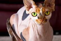 Animals and Interesting Creatures