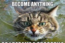 CatsCatsCats / Meow! / by Liz Budd