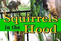 Squirrel-Friends / Anything squirrel-friendly!