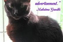 Kittens & Cats / Photos of kittens & cats