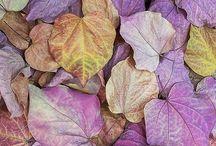 Tu dum - suddenly it's autumn! / by Hanna Niemenmaa