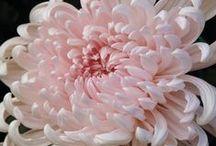 bloom / by Jasmin