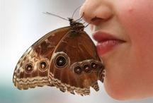 Bows & butterflies