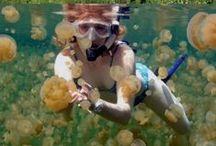 Marine Biologyy / Hopefully my future. / by Madyson Miller