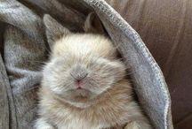 Bunny Hopsalot <3 - here comes cuteness!