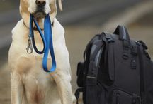 Pet Friendly Travel / Traveling with pets, travel with animals, dog friendly travel, cat friendly travel, animal friendly travel, pet friendly travel, travel with pets