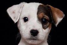 Funny pets / by Edith van Witzenburg