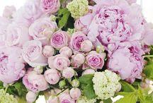 Flowers / by Linda Johnson