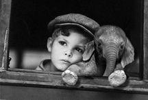 Les elephants bizzares / elephants in sweet circumstances:P