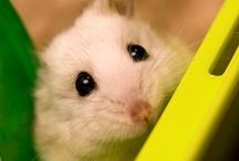 Animals / Beautiful photos of cute animals!