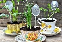 Gardens, Herbs, & Blooms
