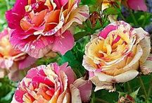 Flowers / by Sherryann Sinclair
