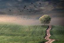 Trees / by Kandie Sweeney