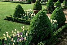 ☼ ☼ ☼ gardening / by Katherine Extance