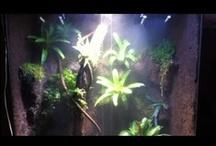 Viv-Palud-Orchid-arium / by Katherine Extance