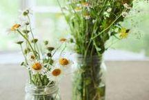 Plantes, fleurs, potager... / by Marie-Neige Lavoie-Gauthier