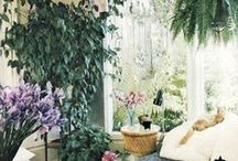 Houseplants / by Katherine Extance