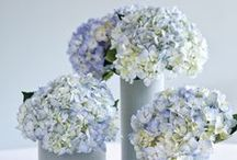Florals and Arrangements / by Sandra Lee