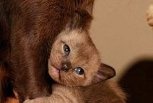 Kitty Cats n Puppy Dogs / Cutey cuteness / by Candy ♕ Donovan