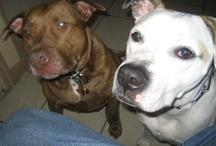 We Love Rescue Pitbulls!!
