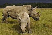 World Wildlife Fund / by JARED LETO