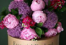 Flowers,Flower arrangement 花 / 花だけをクローズアップしたピンを集めています 珍しいお花もいいですね〜