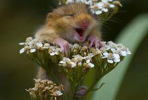 Cute animals 可愛い動物 / 可愛い動物達は本当に癒されますね〜❤️ 猫カフェに行ってみたいな〜
