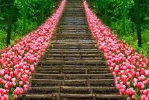 Japanese scene 日本の風景 / 日本庭園や素朴な日本の風景など