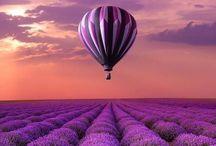 Purple 紫色 / 紫の色彩、紫色の景色など