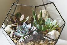 Terrariums / Bring tranquility into your home, no green thumb required!