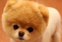 Doggie Dolittle