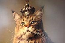 Cats / cats Kittens