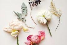 FLOWERS/LEAVES / by Sam Bennett