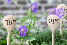 Flower & Plant DIY / DIY ideas with flowers and plants. / by Marike Bijlsma